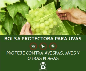 bolsa protectora para uvas