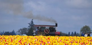 Festival de Tulipanes en Woodburn, Oregon
