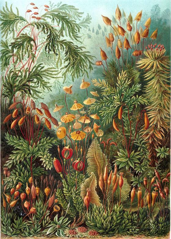 Ernst-Haeckel-3