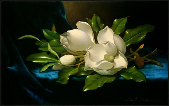 Giant-Magnolias-on-a-Blue-Velvet-Cloth