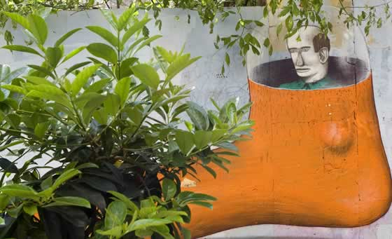 Plantas y el espacio