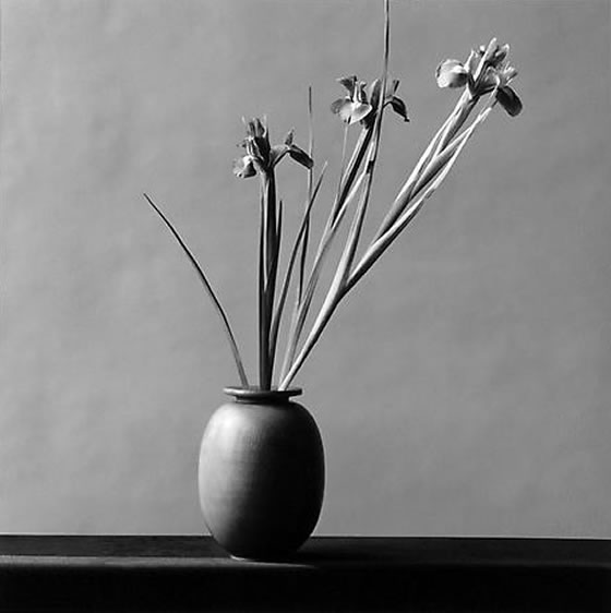 Mapplethorpe-iris
