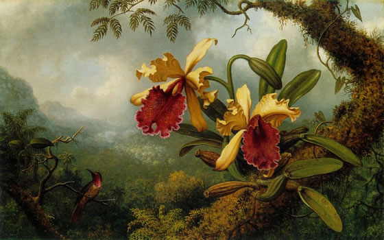 Orchids-and-Hummingbird