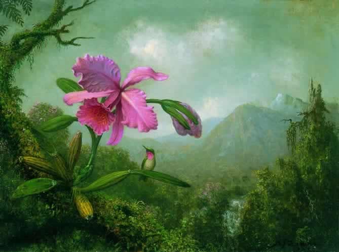 Cattelya-Orchid-and-Three-Brazilian-Hummingbirds