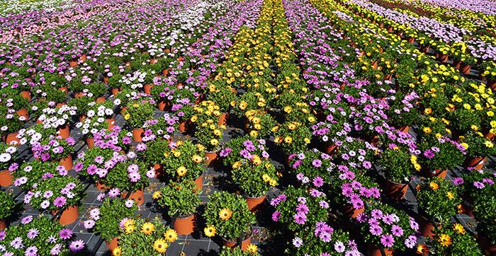 Ahora flores y plantas