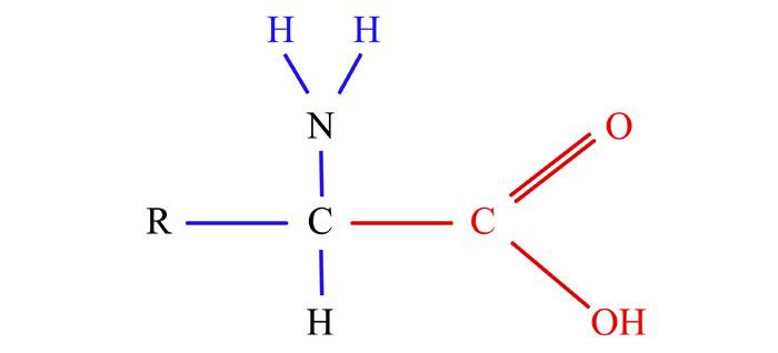 Los aminoácidos son moléculas orgánicas