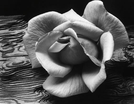 fotografía de Ansel Adams