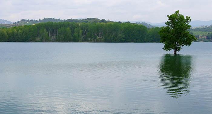 árbol sobre el lago