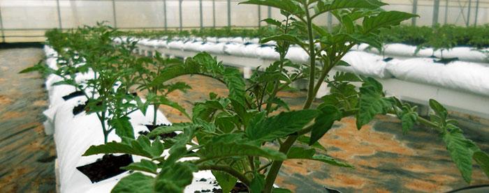 La arcilla expandida para cultivo hidropónico