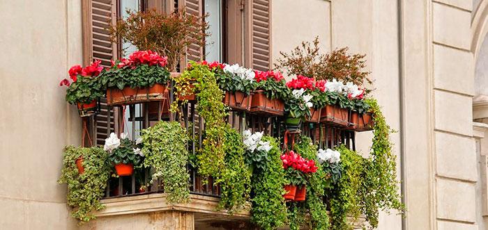 Ahora a disfrutar de plantas en balcones, terrazas y jardines privados