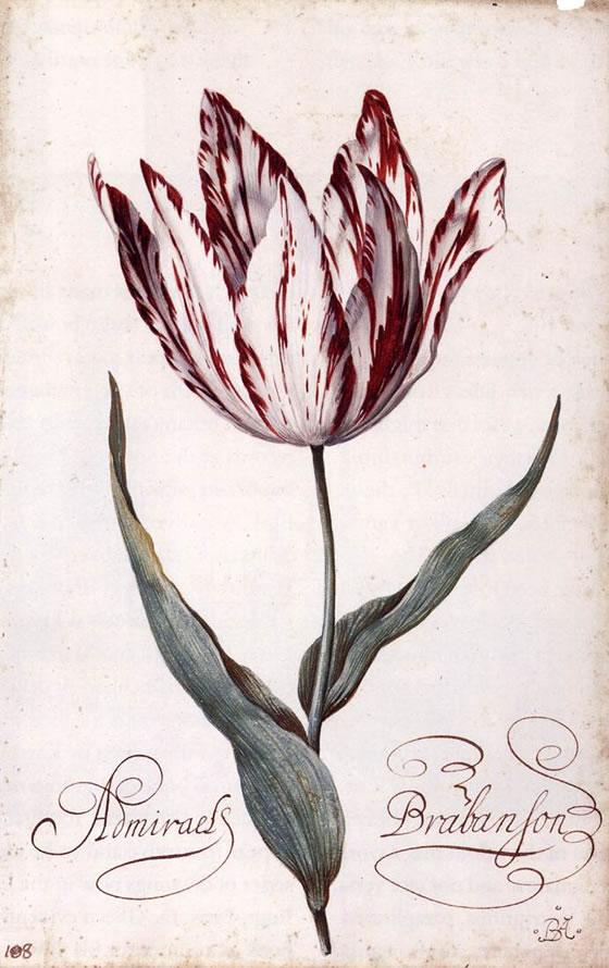 balthasar-van-der-ast-tulipan