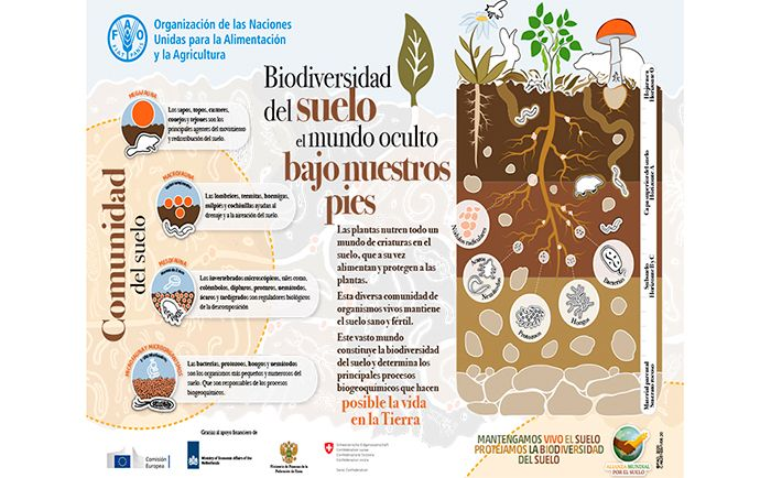 Biodiversidad del suelo