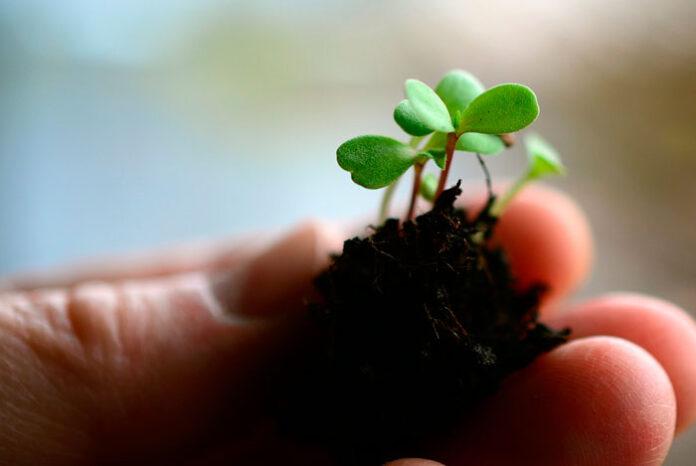 Bioestimulantes agrícolas eficaces y sostenibles