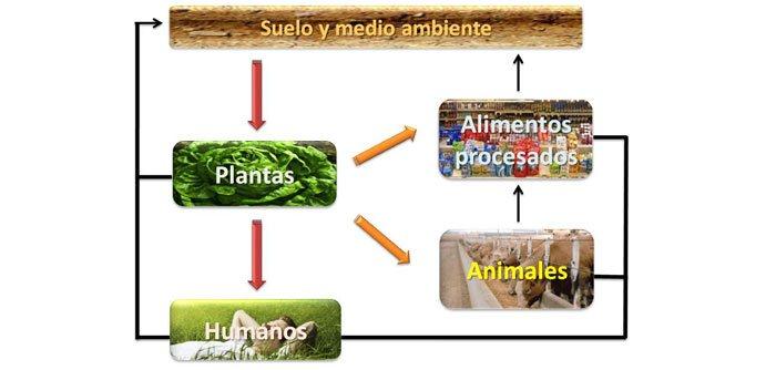 Ciclo de nutrientes incrementados en los programas de biofortificación