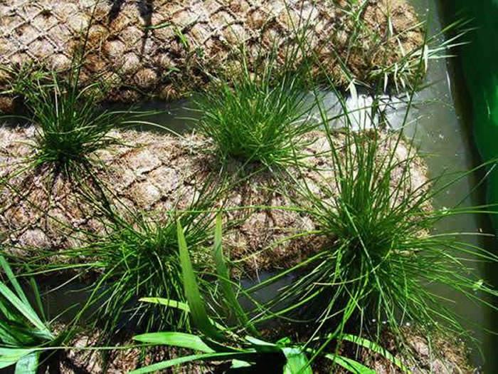 biorrollos vegetados medioambiente