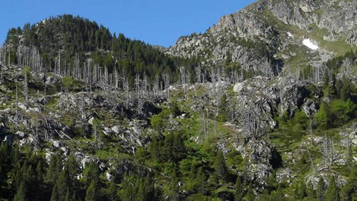 Bosque parcialmente defoliado. / Ángela Ribas