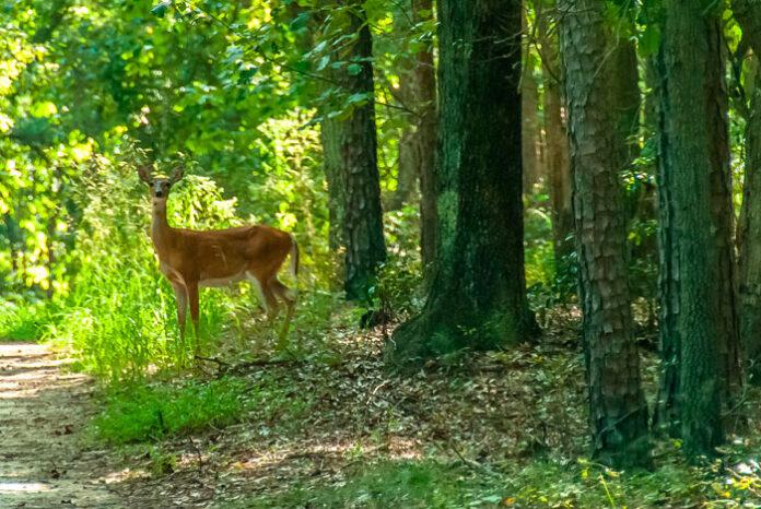 Bosque natural