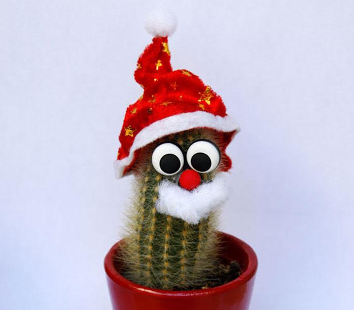 Otras plantas para Navidad