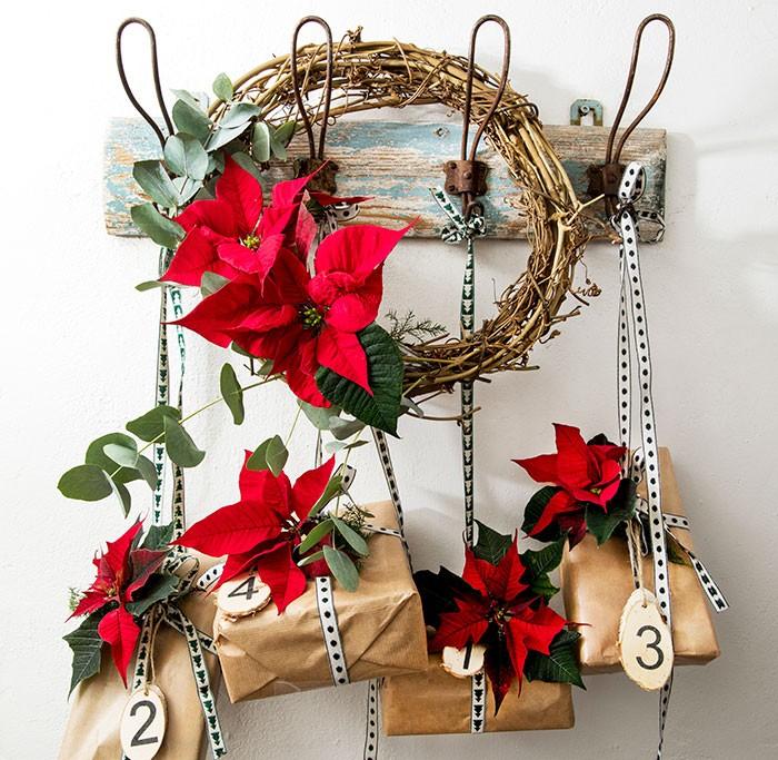 Calendario de Adviento colgado con flores de poinsettia