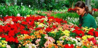 Calendario del jardín en mayo