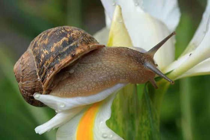 caracoles en plantas ornamentales