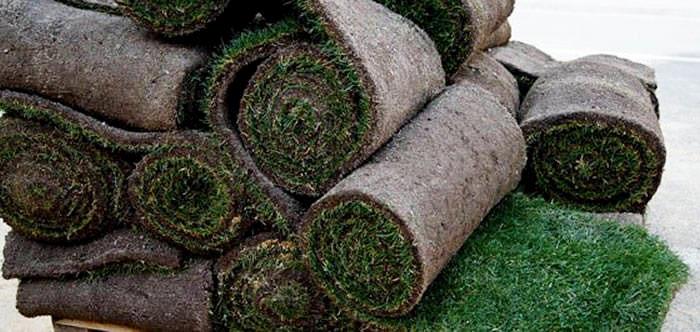 C sped en rollo revista de flores plantas jardiner a for Cesped en rollo