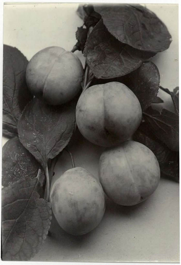 Charless jones plum laxton early red