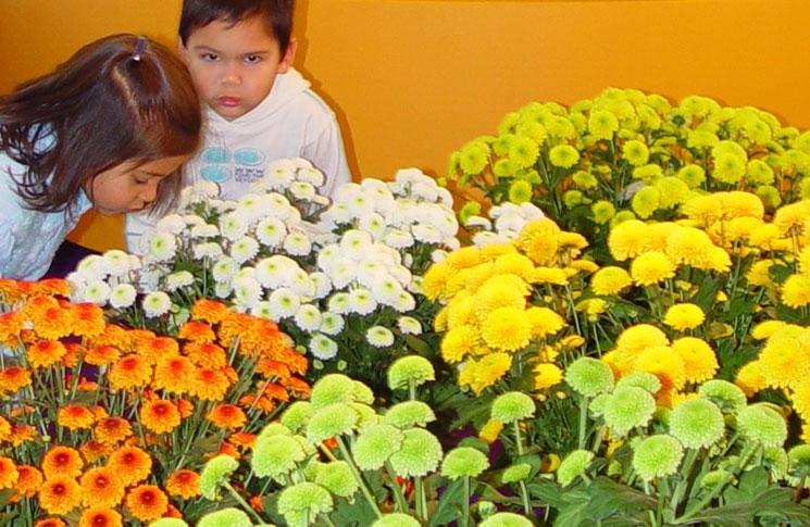 Comercio de flores y plantas
