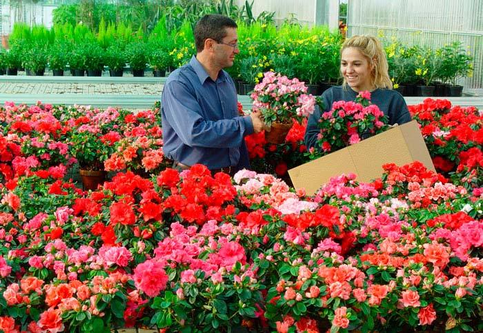 Comercio de plantas ornamentales