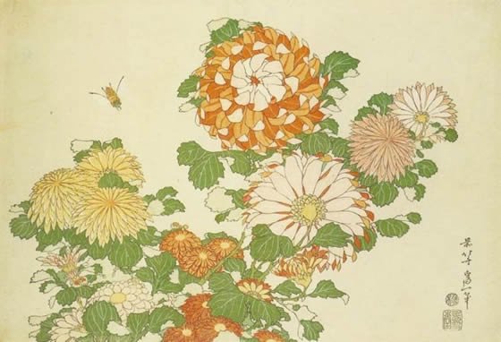 crisantemos-katsushita