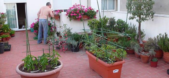 El huerto urbano casero revista de flores plantas - Huerto en la terraza ...