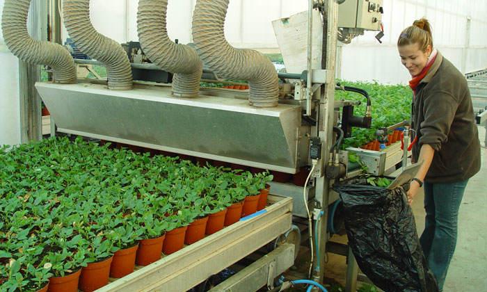 tendencias en cultivo y comercio de plantas | floresyplantas