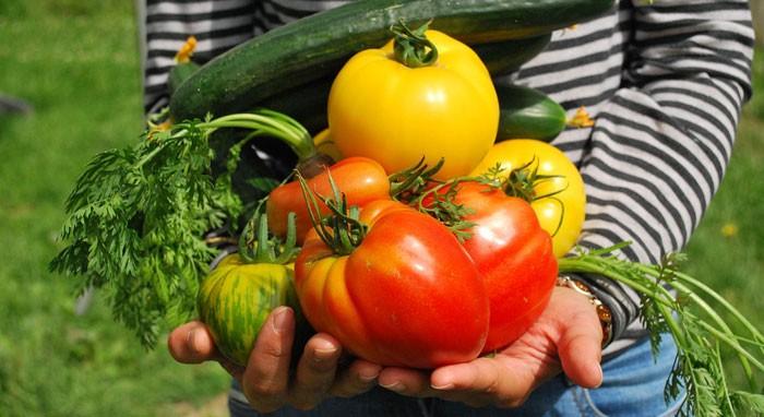 Cultivo en huertos urbanos
