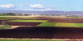 Cultivos hortícolas al aire libre