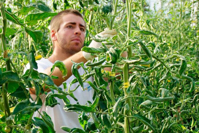 Expertos en agronutrientes y bioestimulantes agrícolas