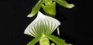 curso de cultivo de orquideas