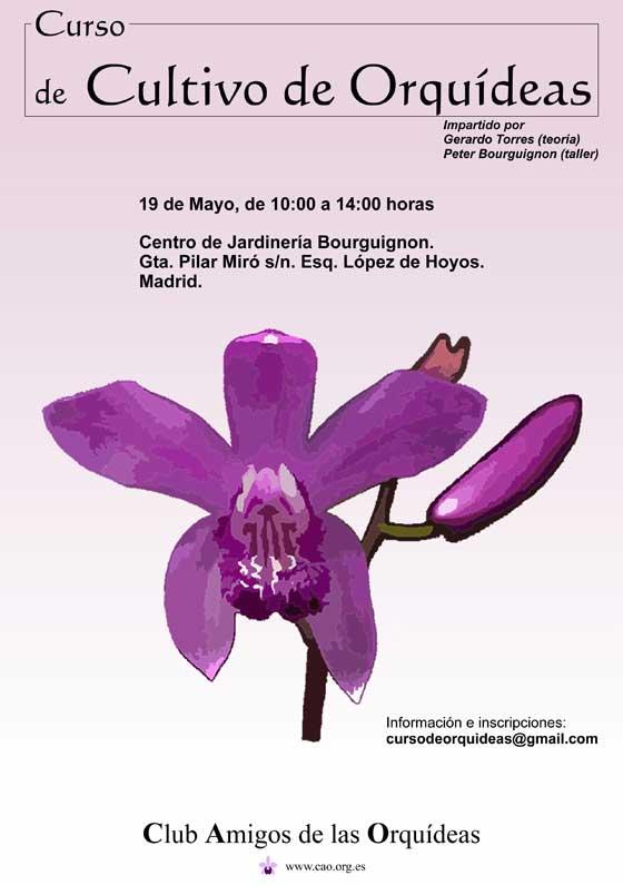 Curso de cultivo de Orquídeas