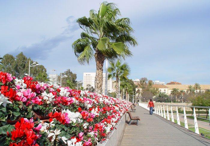 Cuidados del Cyclamen persicum como planta de exterior