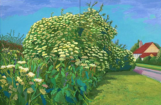 David Hockney, Elderflower Blossom