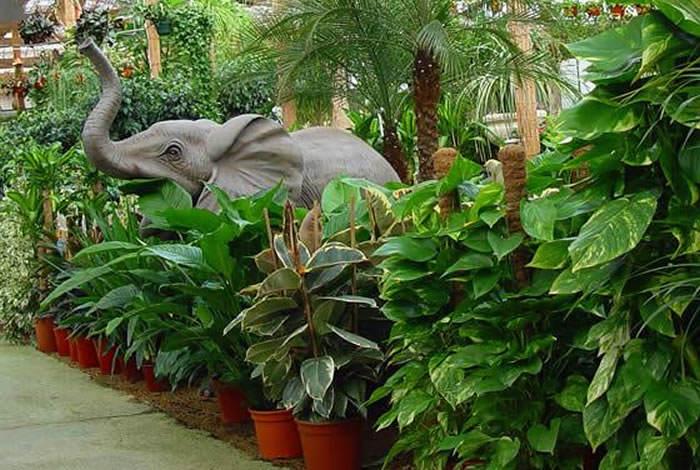Plantas de interior verdes for Arboles y plantas para jardin