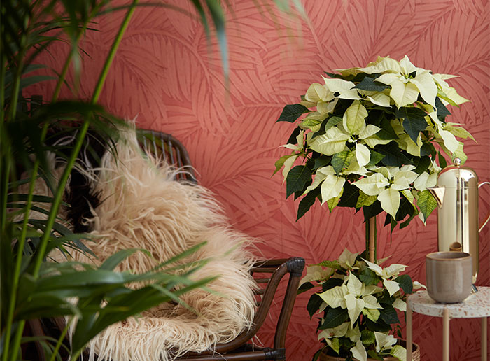 Decoraciones con poinsettia