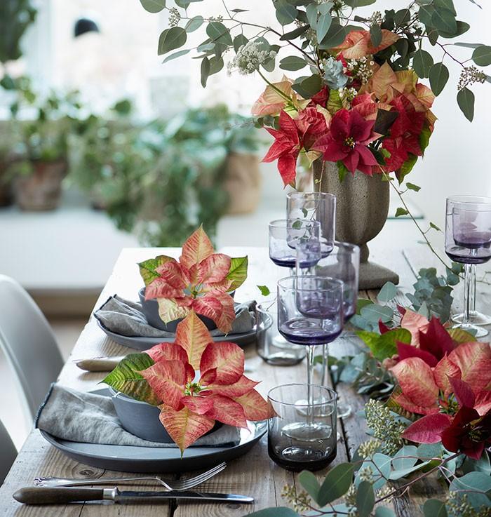 Decoraciones de mesa de estilo romántico con poinsettias