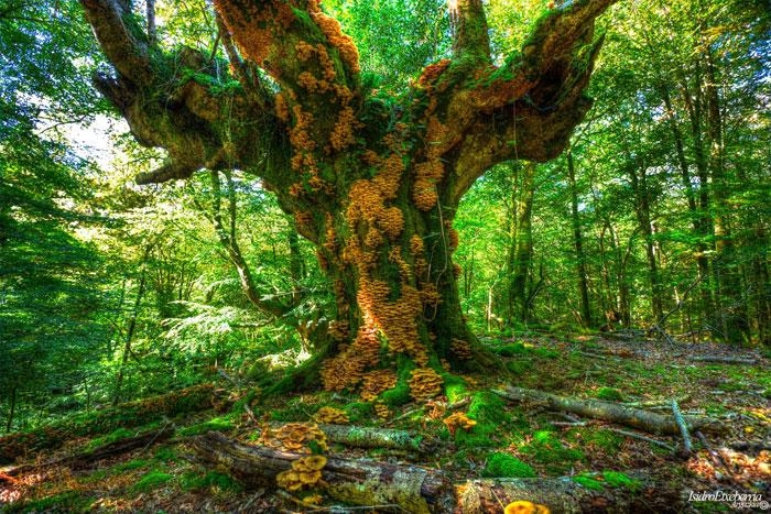 Por los bosques de Navara