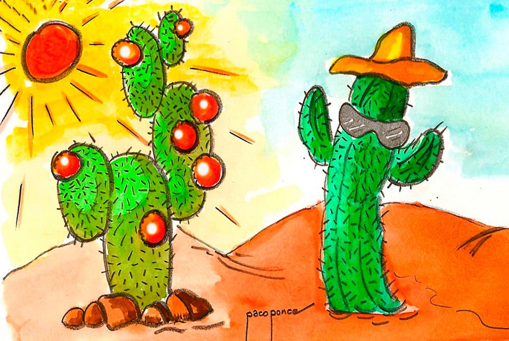 Los cactus, se pueden tocar pero con cuidado