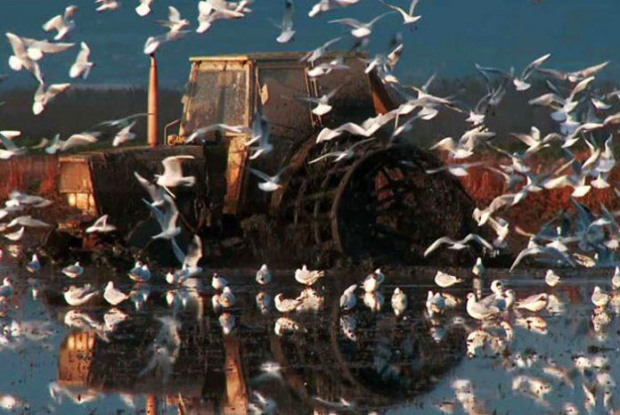 Documentales de naturaleza en la Albufera