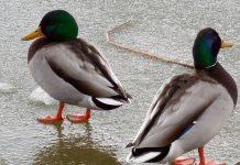 Mantenimiento del estanque en invierno