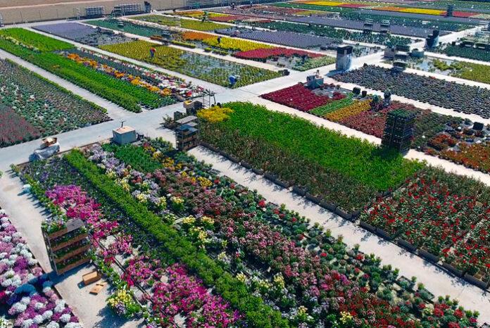 Empresas comercializadoras de plantas