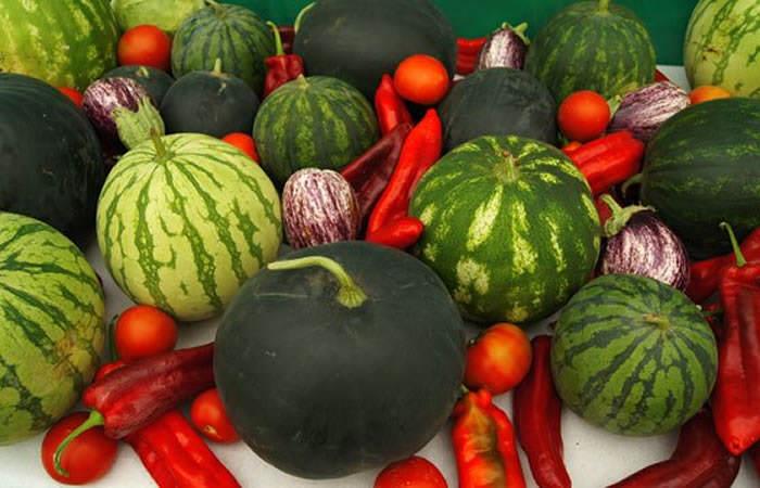 engorde de frutos hortícolas