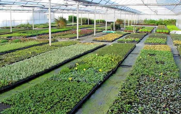 esquejes de plantas ornamentales-2