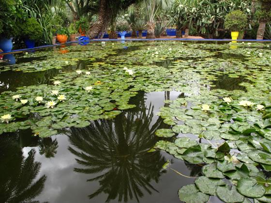Estanque en el Jardin Majorelle de Marrakech